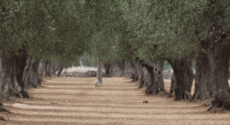 Ferienwohnung Gallipoli Apulien
